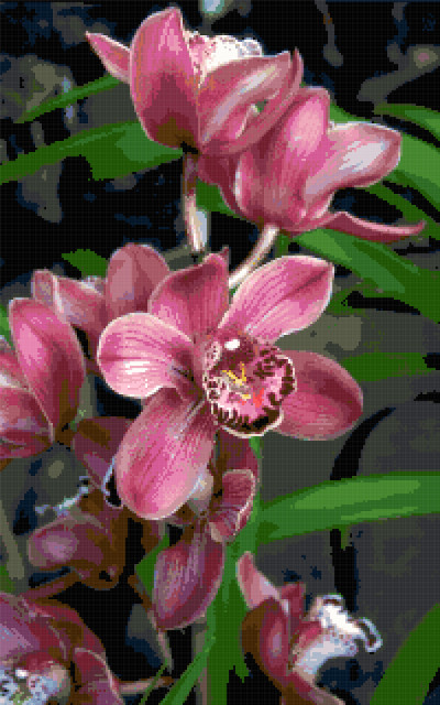 orchids cross stitch image