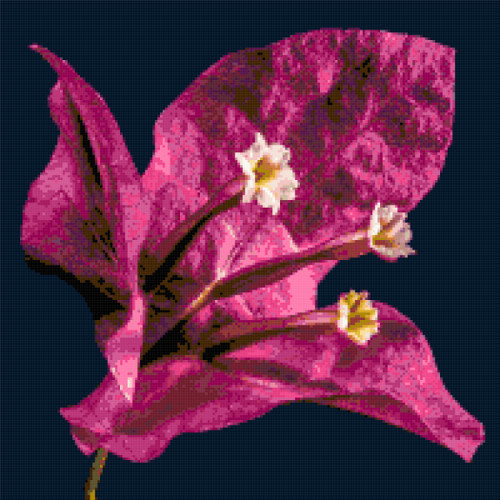 bougainvillea cross stitch image