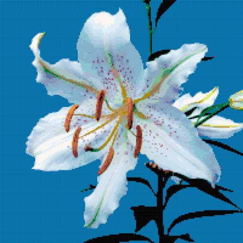 white lily cross stitch image