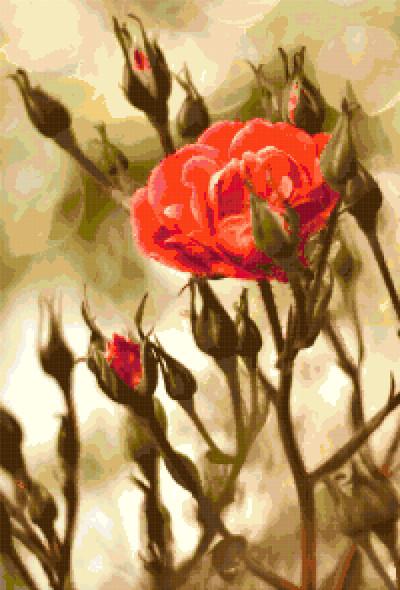 rose cross stitch image