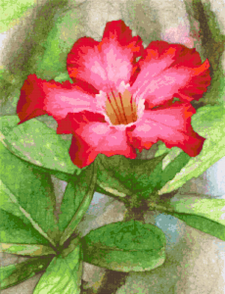 desert rose cross stitch image