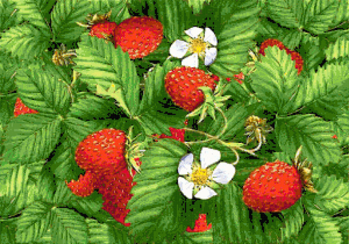 strawberries cross stitch image