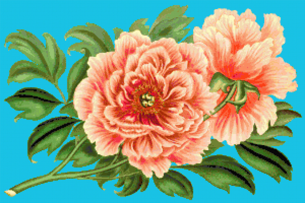 peonies cross stitch image