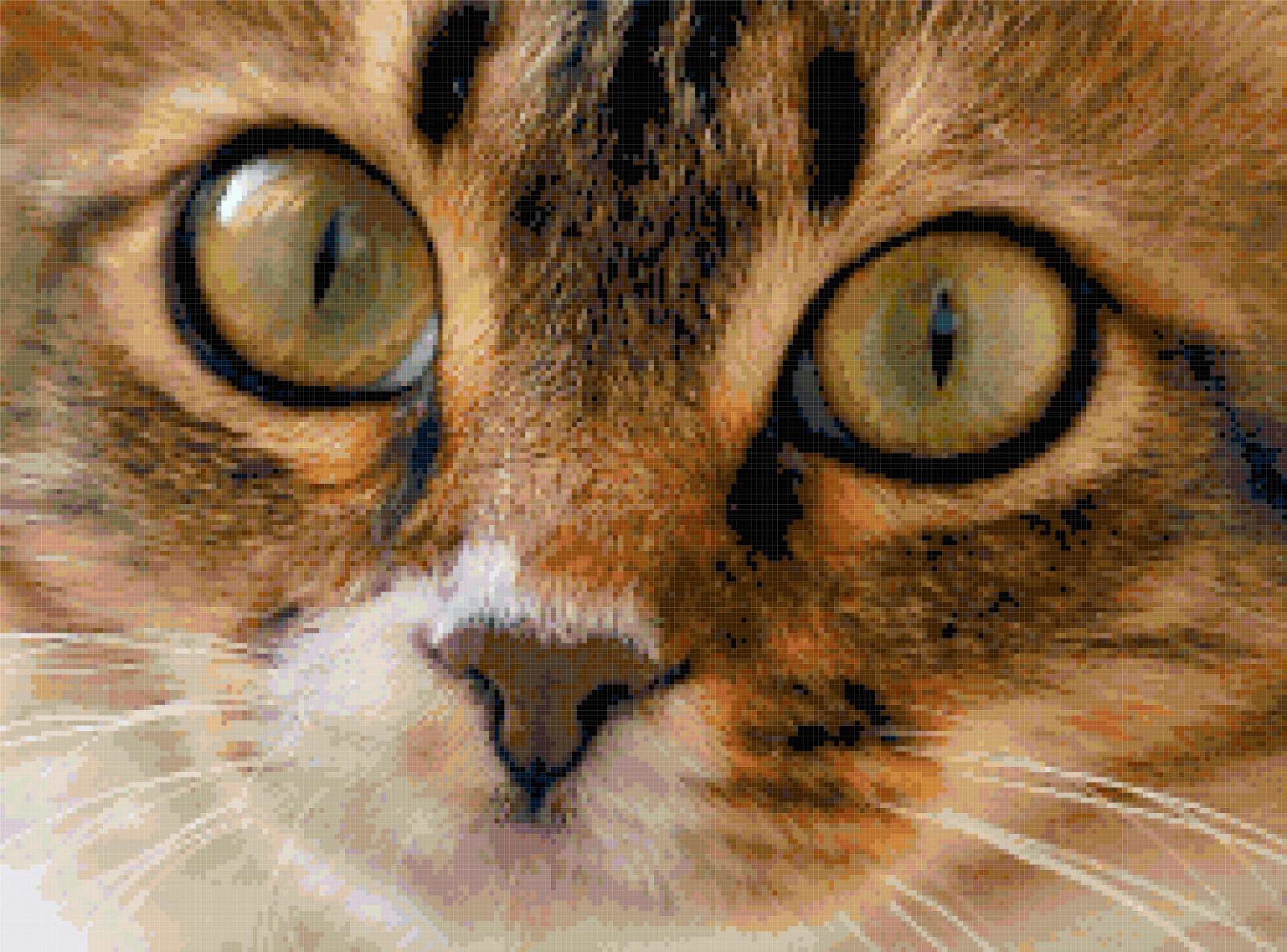 kitten cross stitch image
