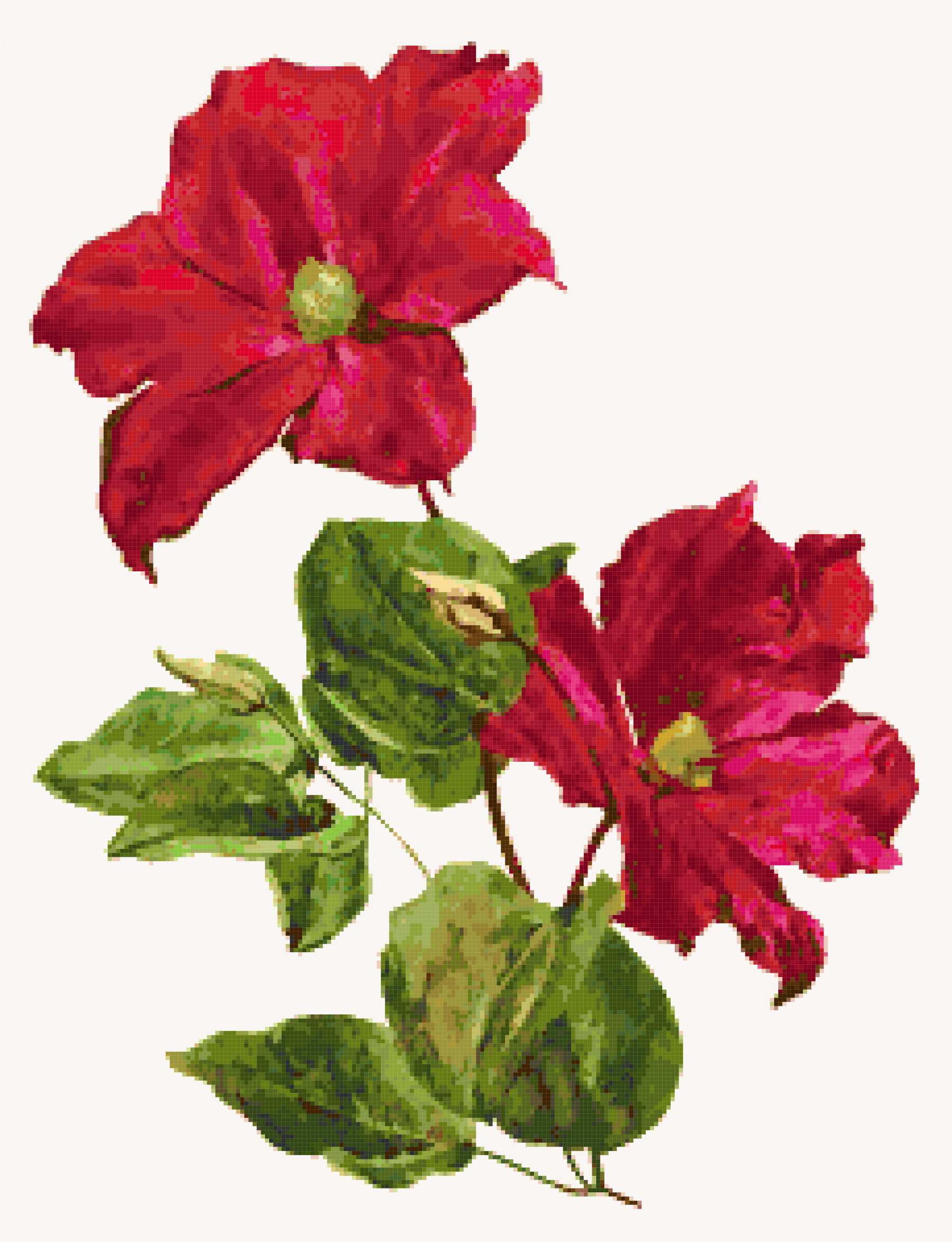 clematis cross stitch image