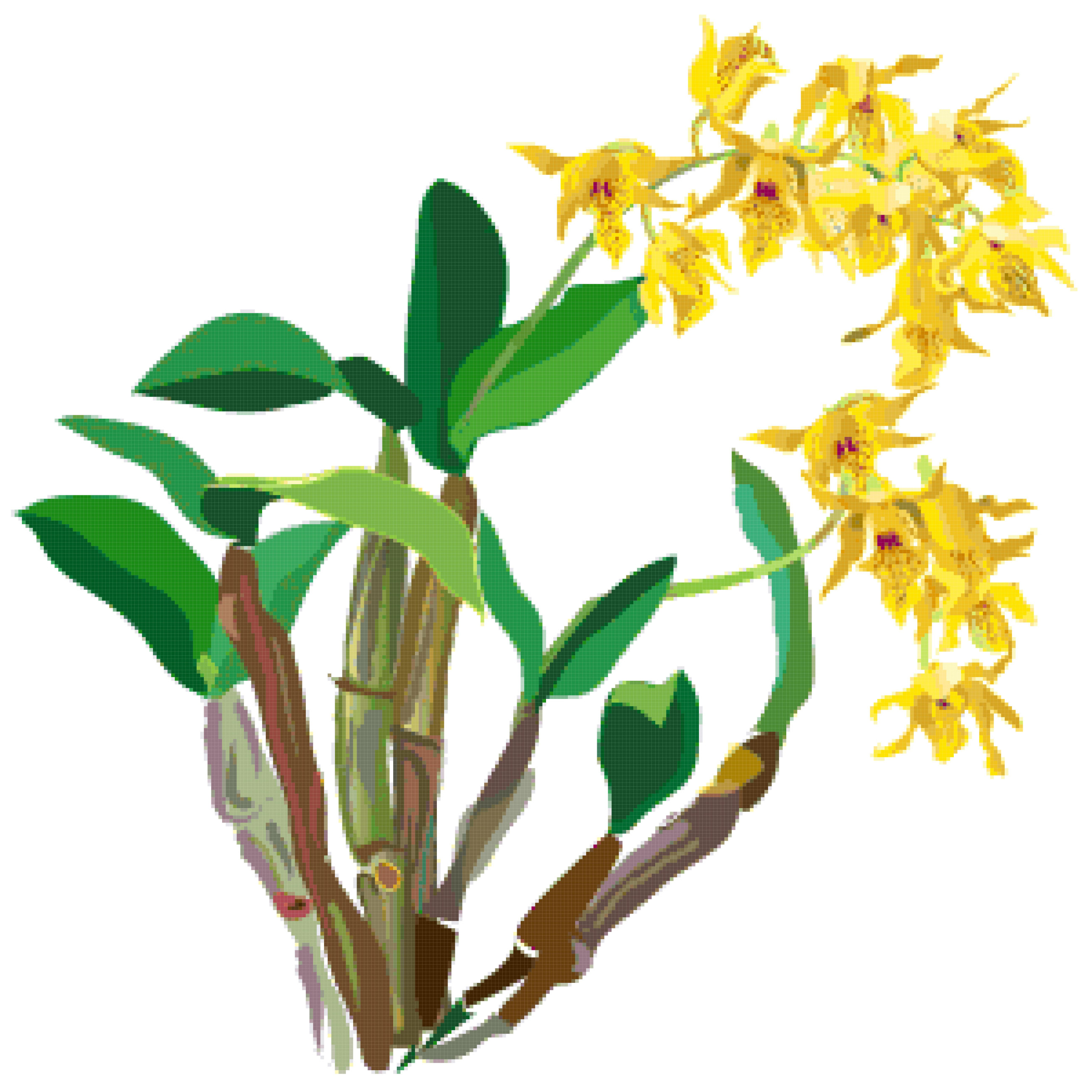 dendrobium orchid cross stitch image